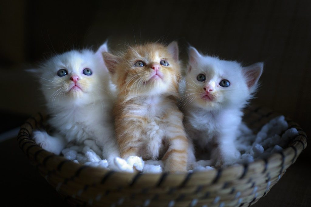 cat, page, three